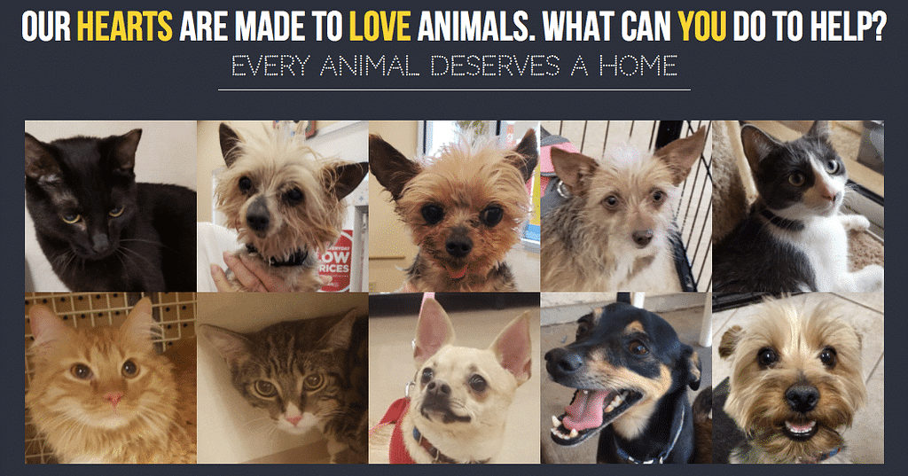 Pets for the Elderly from Pammy's