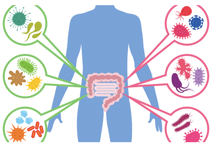 Keep your gut healthy and the critters away from the rest of your body