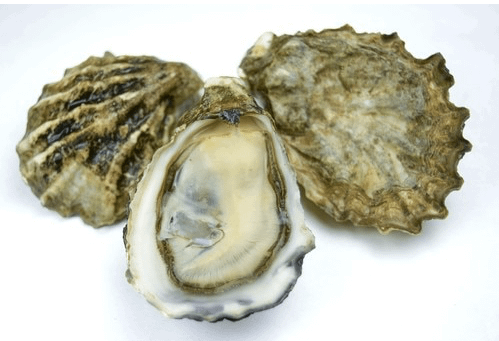 Oyster are a great nutritious food for seniors