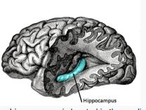Hippocampus health can prevent alzheimer's